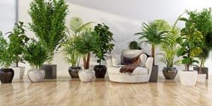 trägolv, golvvård